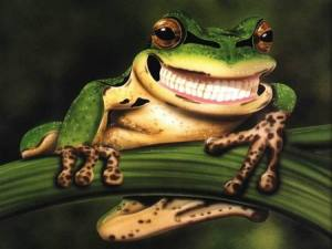 Cheesie Smile - Frog